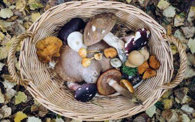 Oyster Mushroom Saute