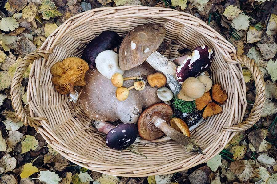 Mushroom recipes from the Spice of Life Farm