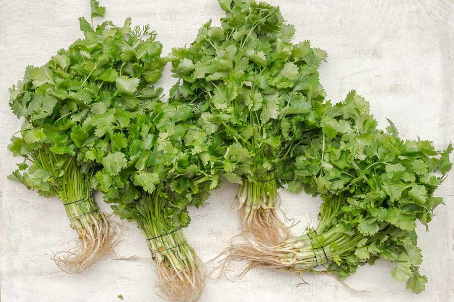 Parsley salad recipe from Spice of Life Farm